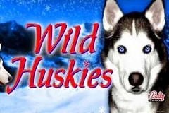 Where Can I Play Wild Huskies Machines?