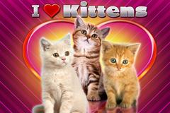I Love Kittens Slot