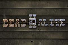 Dead or Alive II Slot