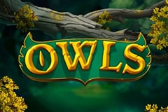 Owls Slot Game